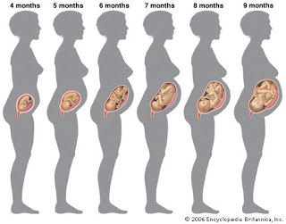 Pregnancy-Month-by-Month